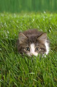 ready-to-pounce-iphone