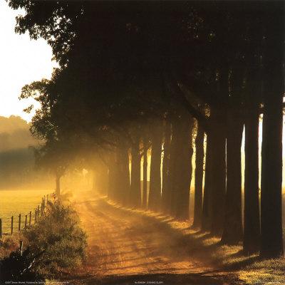 evening-glory