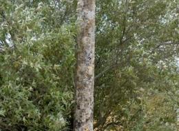 Croix d'Authiou Nièvre Passion