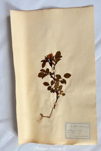 Planche d'herbiers