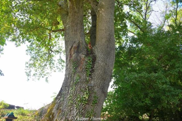 Vierge dans l'arbre