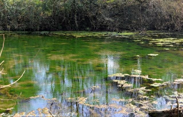 Gour des Fontaines de Sougy Sur Loire