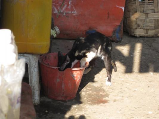 eine durstige Katze am Markt