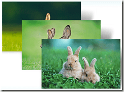 windows 7 Bunnies theme