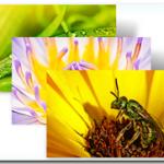 Download 5 New Fresh Windows 7 Theme