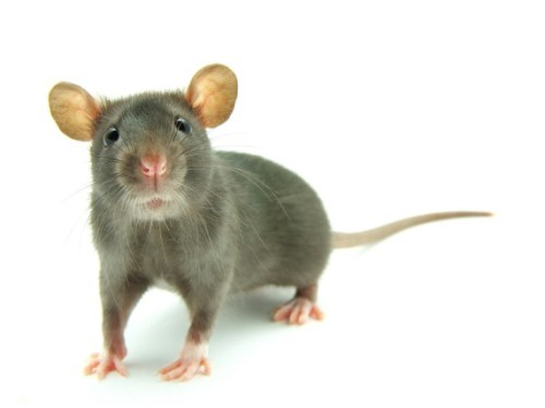 How to manage pest problems