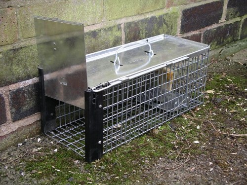 Tips for trapping the rats in your home