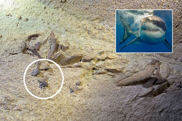 Scientists report trove of shark fossils in Mammoth Cave