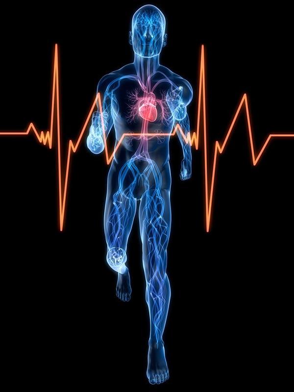 Corazón frecuencia cardíaca