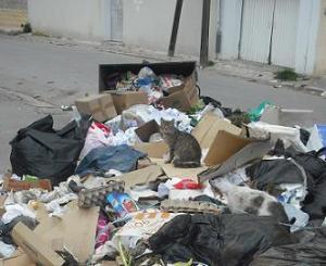 Poubelle Tunis