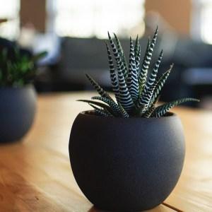 succulent-pxb-900×900-b