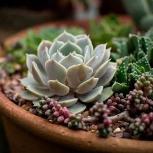 succulent2-pxb-900×900-a