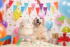 Birthday Party For Your Dog