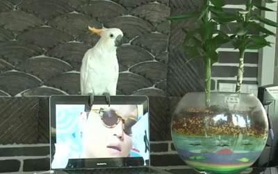 папагал пее гангнам тайл