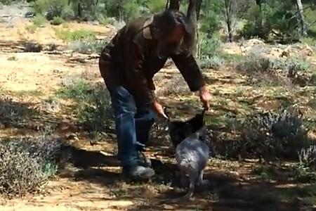 хващане на кенгуру