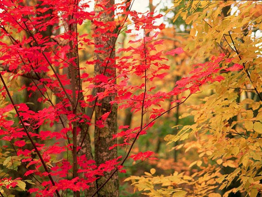Plantas terrestres las plantas y su medio for Tipos de arboles y su significado