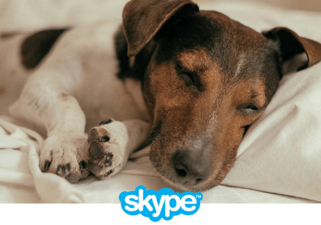 Skype Gets Mobile Group Video Calling