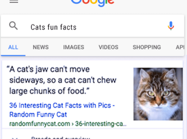 Google Adds Fun Animal Facts to Search