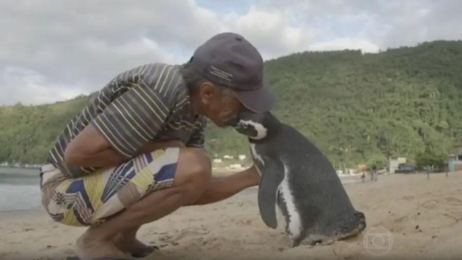 Pinguin Dindim schwimmt jedes Jahr 8000 Kilometer
