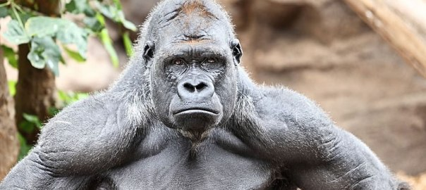 800lb Gorilla: The Dangers of Selling on Amazon