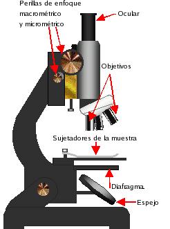 El Microscopio y Sus Partes  Webscolar