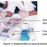 ELECTROFORESIS ADN