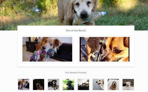 como crear un blog de mascotas