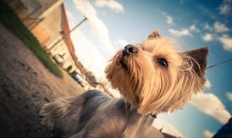 como crear un blog de mascotas y animales