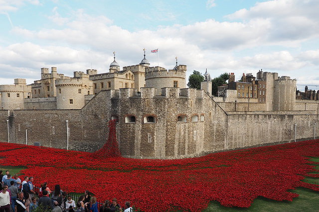 800,000 poppies: one for each British death in World War One