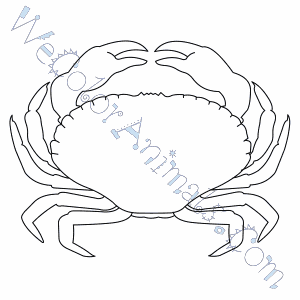 click here for coloring page
