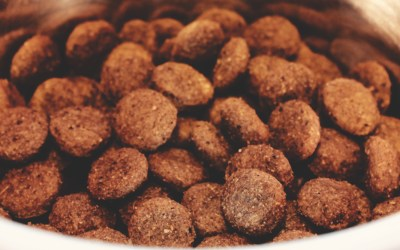 Why Complete & Balanced Dog Food is neither Complete nor Balanced!