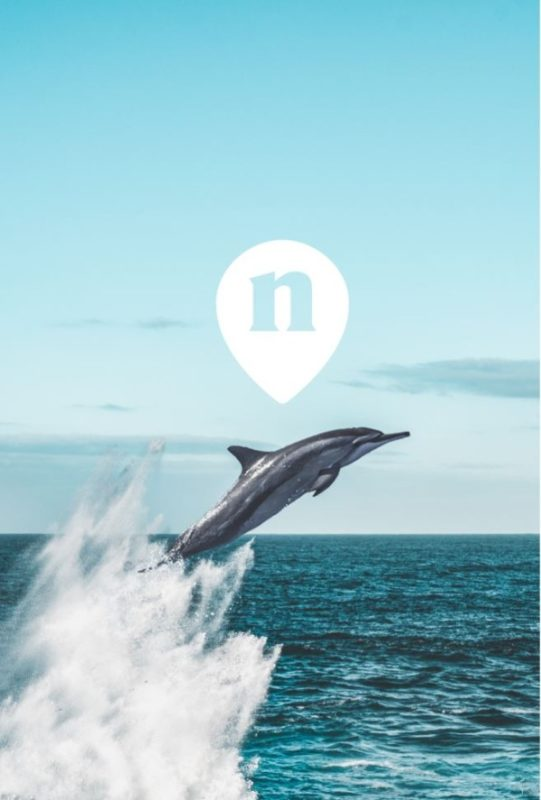 "Dolphin-nemo-travel-top-honeymoon locations ""width ="" 541 ""peak ="" 800 ""srcset ="" https://www.weddingideasmag.com/wp-content/uploads/2019/11/Dolphin-nemo-travel -top-honeymoon-destinations-541x800.jpg 541w, https://www.weddingideasmag.com/wp-content/uploads/2019/11/Dolphin-nemo-travel-top-honeymoon-destinations-203x300.jpg 203w, https : http: //www.weddingideasmag.com/wp-content/uploads/2019/11/Dolphin-nemo-travel-top-honeymoon-destinations.jpg 600w ""sizes ="" (max-width: 541px) 100vw, 541px ""/></p data-recalc-dims="