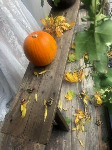 halloween window display