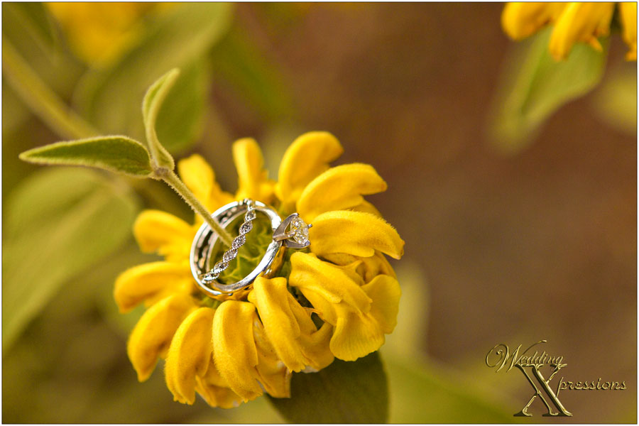 wedding rings on yellow flower
