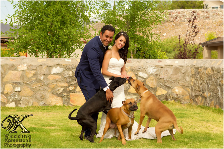 wedding couple with three dogs