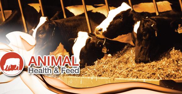 Animal Health and Feed 4