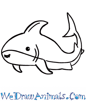 How To Draw A Cute Shark