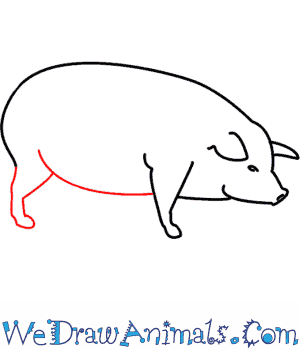 Image of: Drawing Tips Print Tutorial We Draw Animals How To Draw Pig