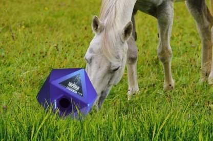 snoepjes en voerbal paard