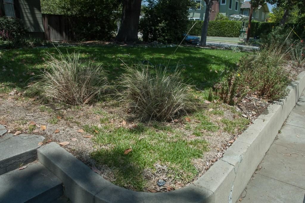 Planting deergrass