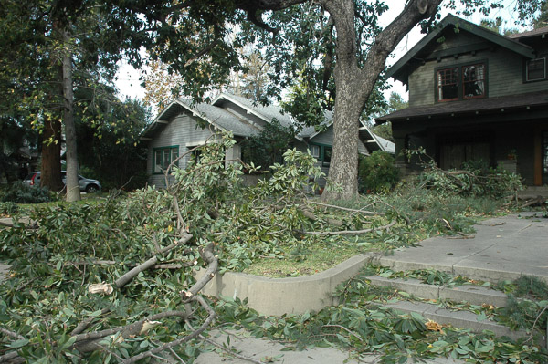 Tree damage during 2011 windstorm.