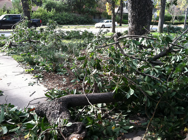 Large branches fell during storm of 2011.