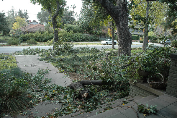 Tree damage from windstorm