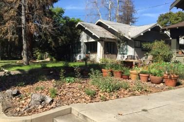 Herbs in pots, native grasses and perennials near sidewalk (Mar '15)