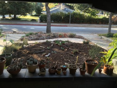 Veggies set out for planting, radial pattern, 1/3/16