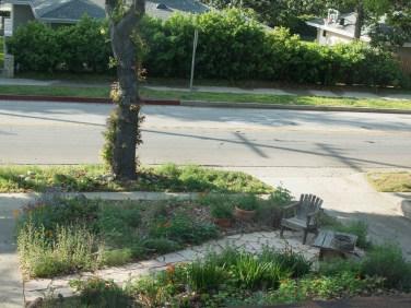 Front yard garden, 3/18/16)