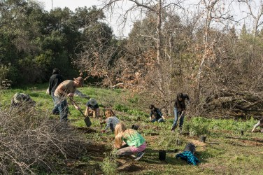 Volunteers of all ages plant new native plants in the park.