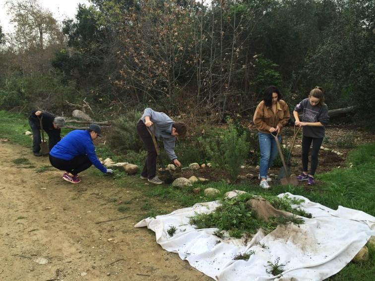 Volunteers weed
