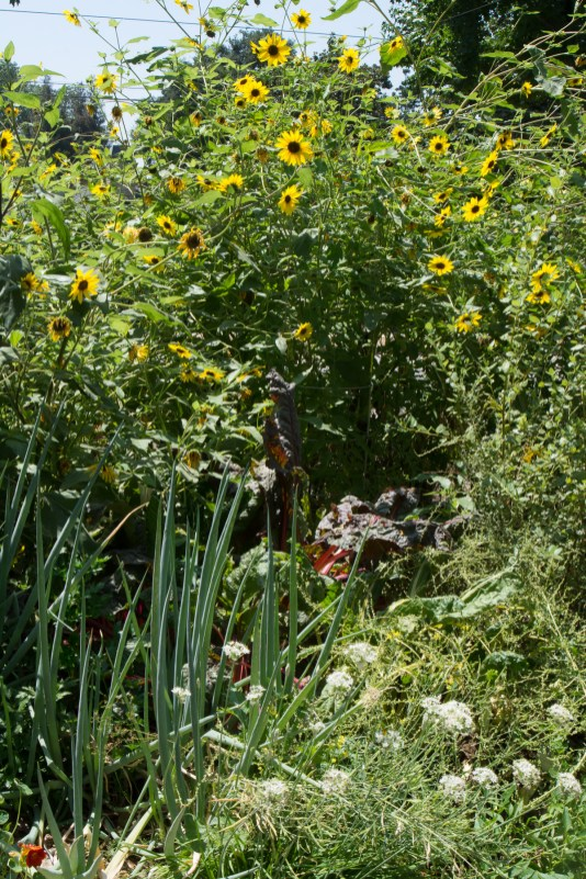 veg garden and sunflowers