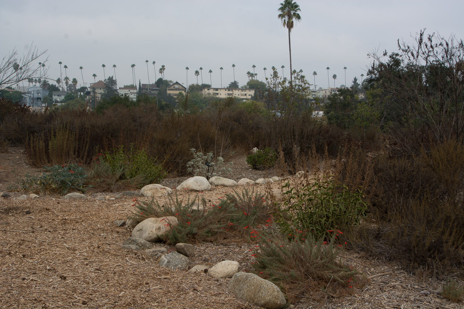 South Pasadena nature park
